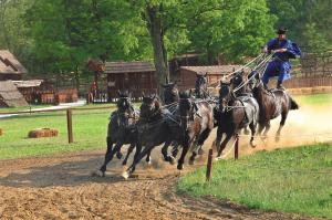 Horse Show At Equestrian Park Tour Packages